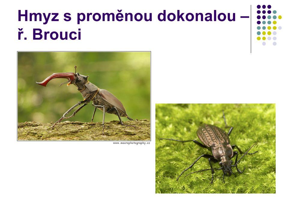 Hmyz s proměnou dokonalou – ř. Brouci