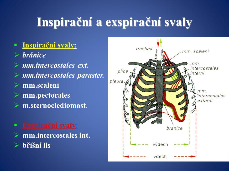 Inspirační a exspirační svaly