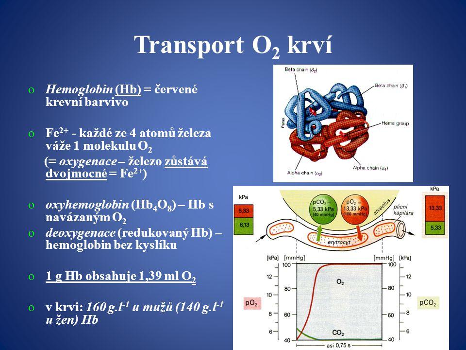 Transport O2 krví Hemoglobin (Hb) = červené krevní barvivo
