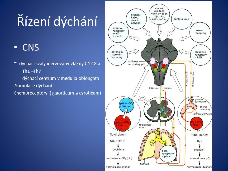 Řízení dýchání CNS - dýchací svaly inervovány vlákny C4-C8 a Th1 –Th7