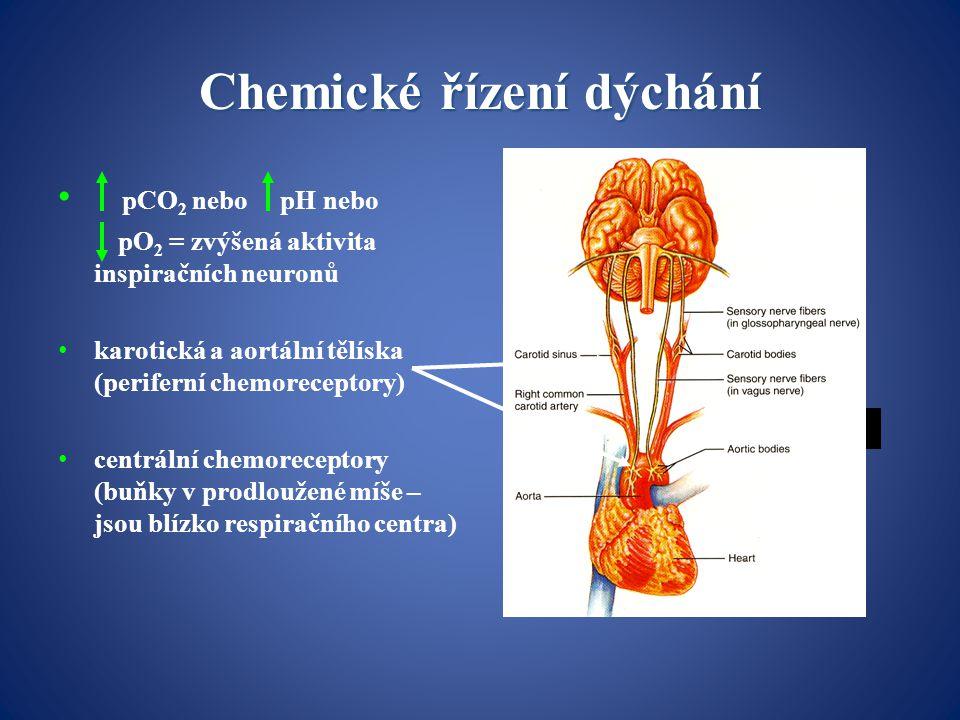 Chemické řízení dýchání