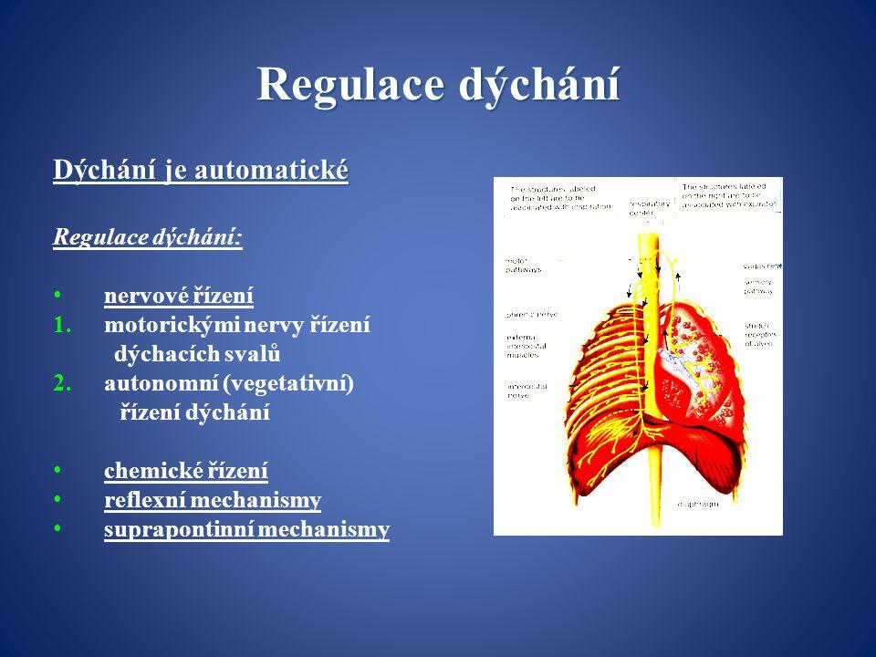 Regulace dýchání Dýchání je automatické Regulace dýchání: