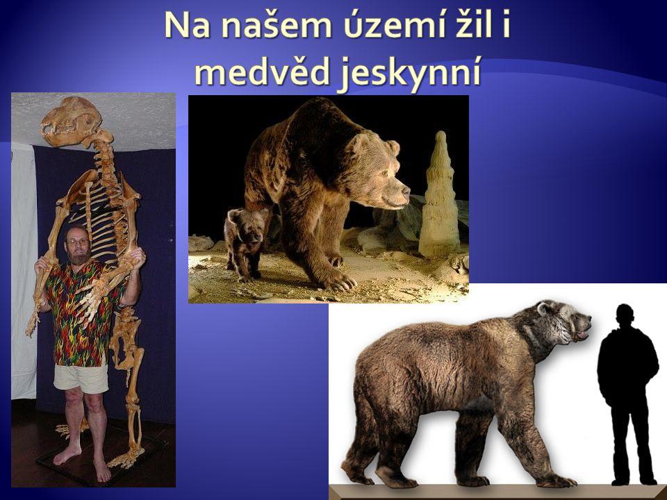 Na našem území žil i medvěd jeskynní