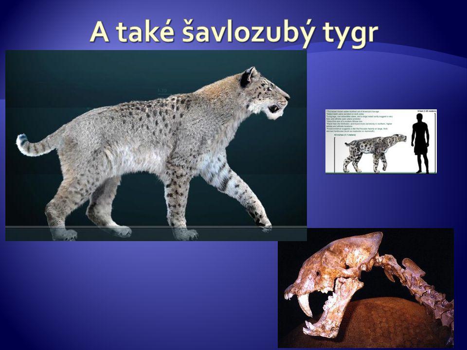 A také šavlozubý tygr