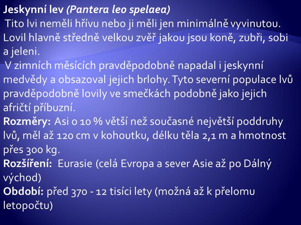 Jeskynní lev (Pantera leo spelaea)