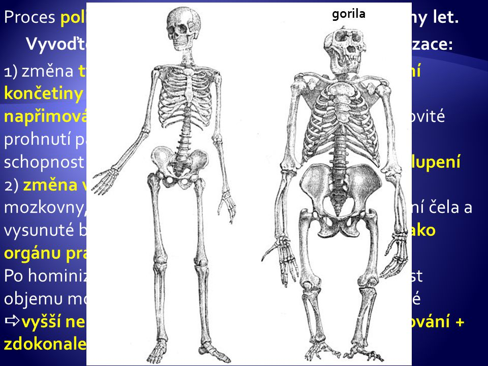 Vyvoďte podle obrázku, jaké byly znaky hominizace: