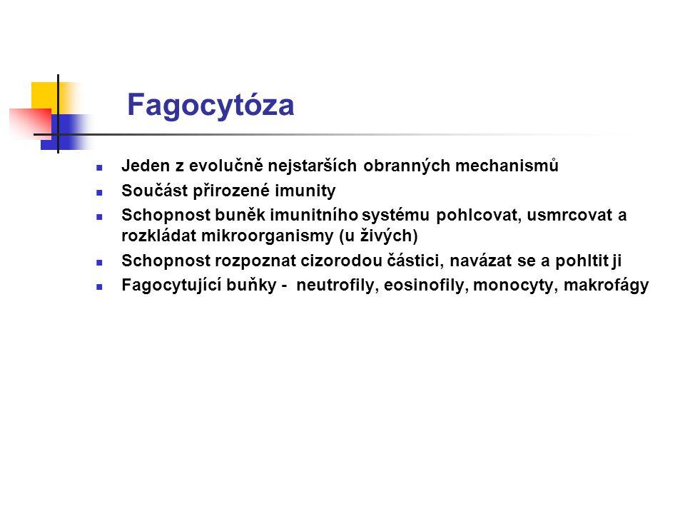 Fagocytóza Jeden z evolučně nejstarších obranných mechanismů