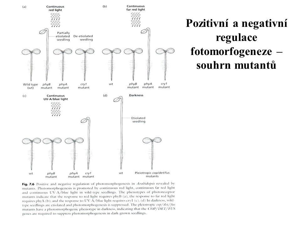 Pozitivní a negativní regulace fotomorfogeneze – souhrn mutantů