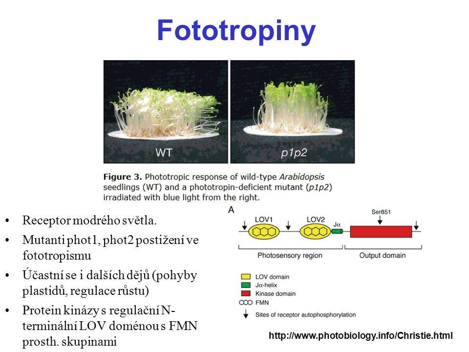 Fototropiny Receptor modrého světla.