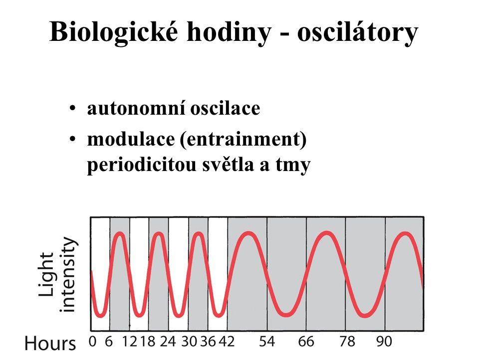 Biologické hodiny - oscilátory