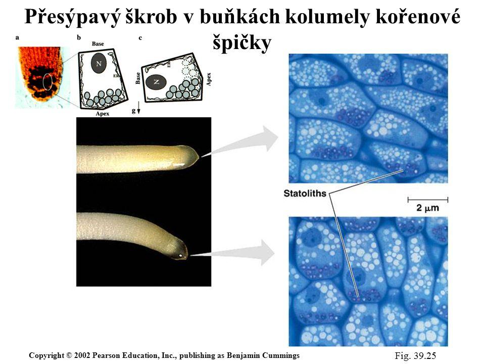 Přesýpavý škrob v buňkách kolumely kořenové špičky