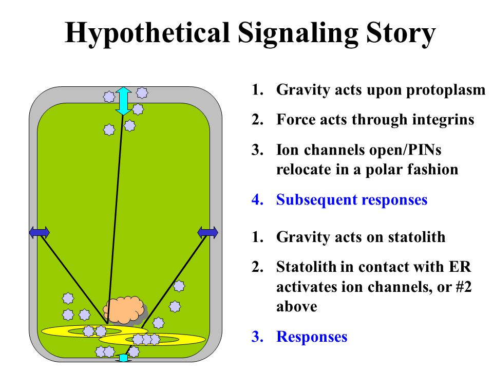 Hypothetical Signaling Story