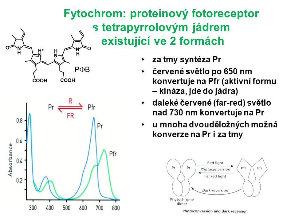 Fytochrom: proteinový fotoreceptor s tetrapyrrolovým jádrem