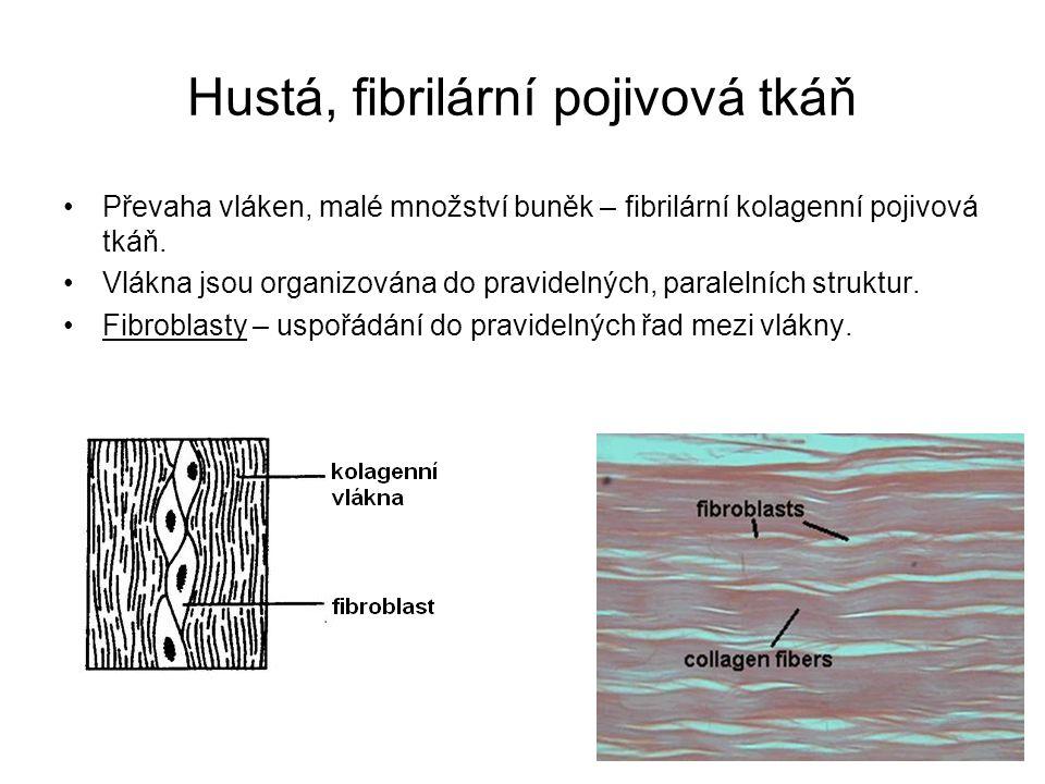 Hustá, fibrilární pojivová tkáň