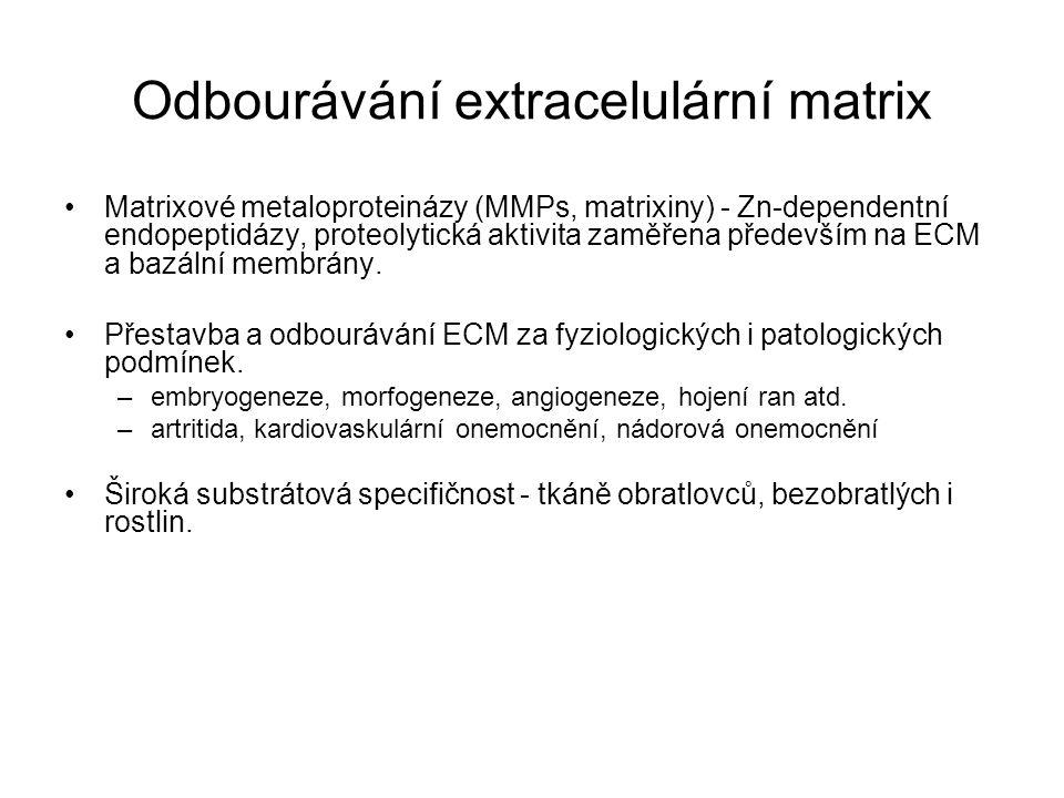 Odbourávání extracelulární matrix