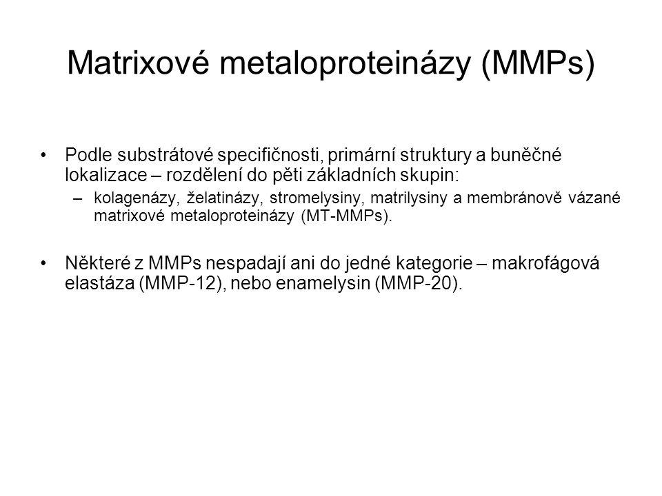 Matrixové metaloproteinázy (MMPs)