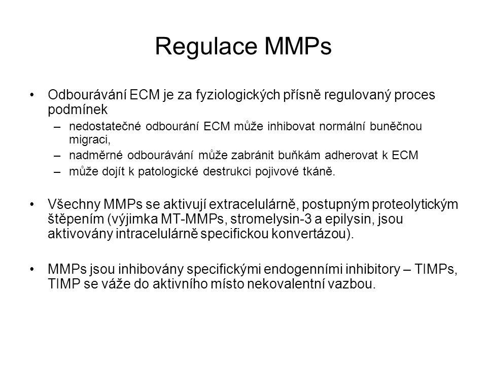 Regulace MMPs Odbourávání ECM je za fyziologických přísně regulovaný proces podmínek.