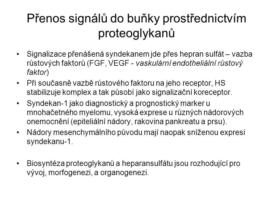 Přenos signálů do buňky prostřednictvím proteoglykanů