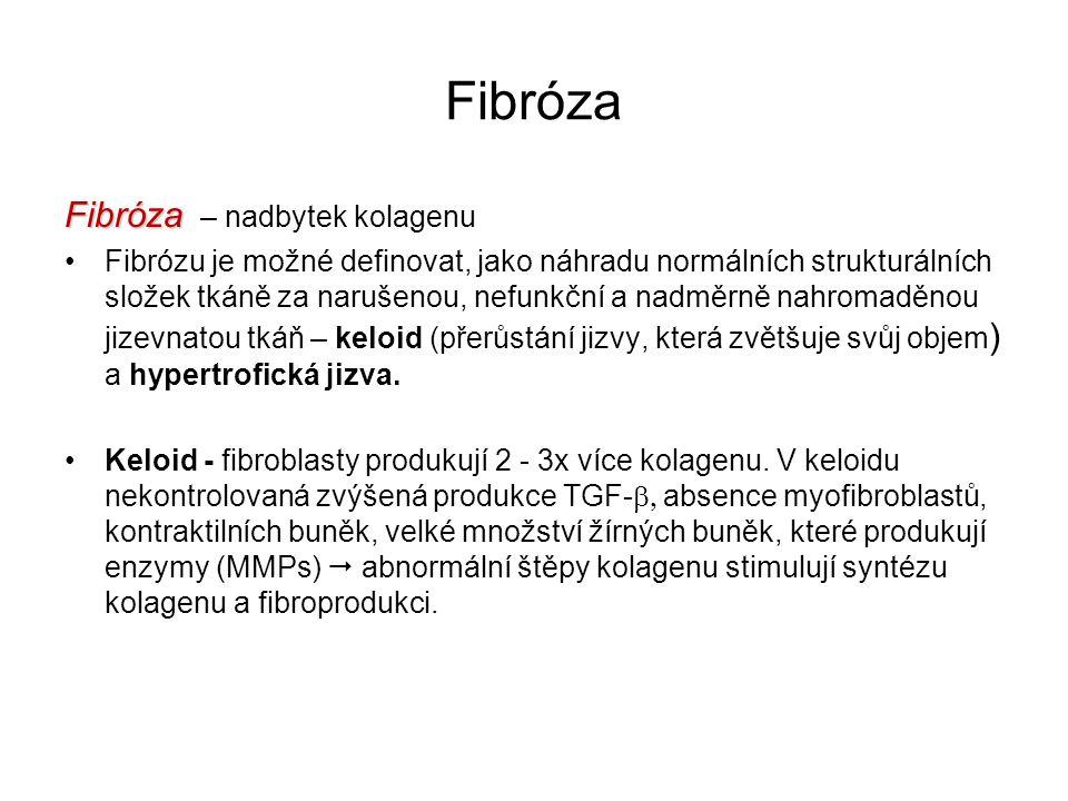 Fibróza Fibróza – nadbytek kolagenu