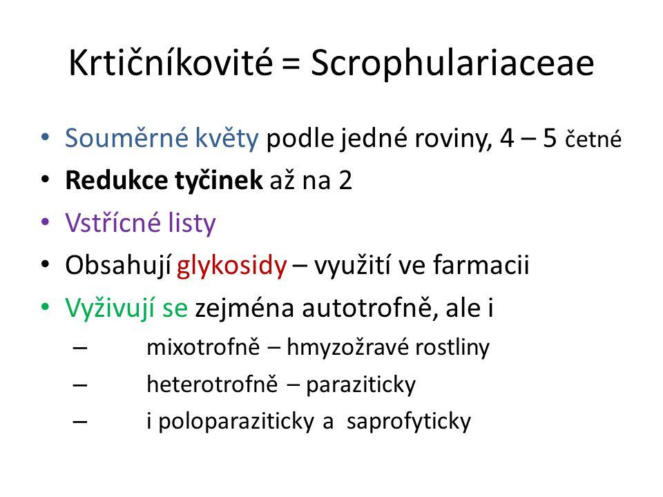 Krtičníkovité = Scrophulariaceae