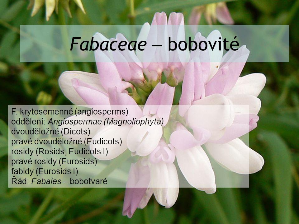 Fabaceae – bobovité F. krytosemenné (angiosperms)