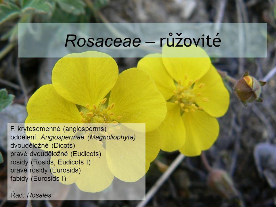 Rosaceae – růžovité F. krytosemenné (angiosperms)