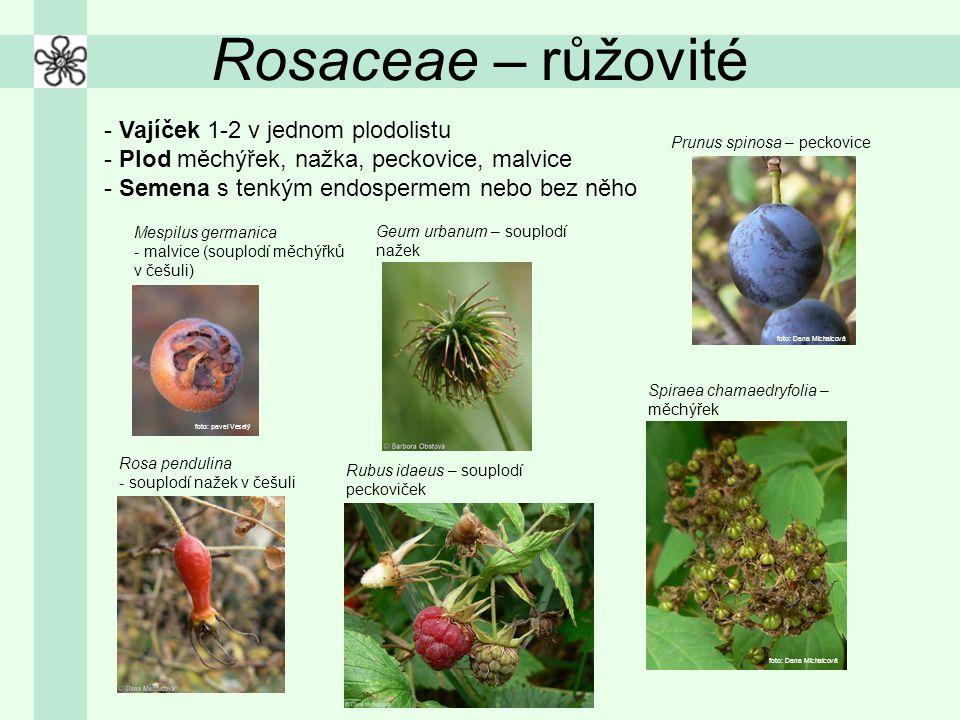 Rosaceae – růžovité Vajíček 1-2 v jednom plodolistu