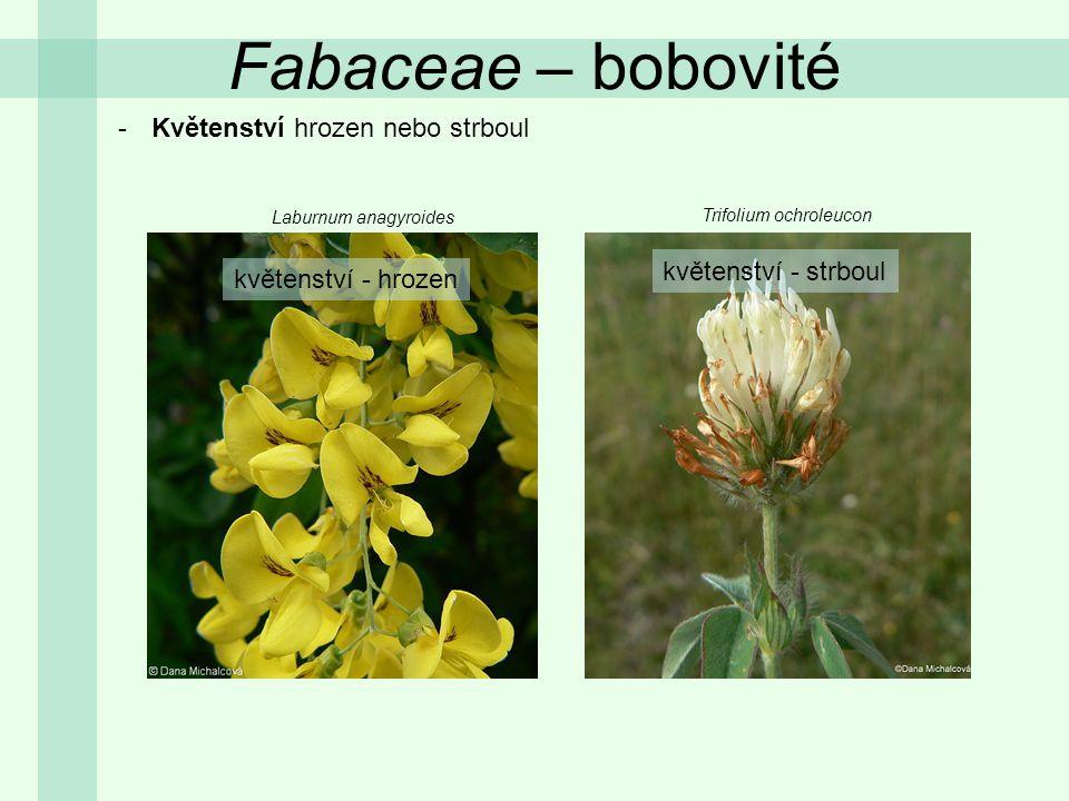 Fabaceae – bobovité Květenství hrozen nebo strboul