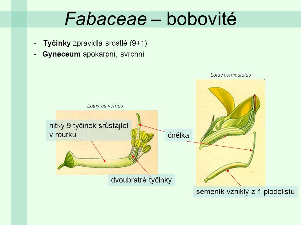 Fabaceae – bobovité Tyčinky zpravidla srostlé (9+1)