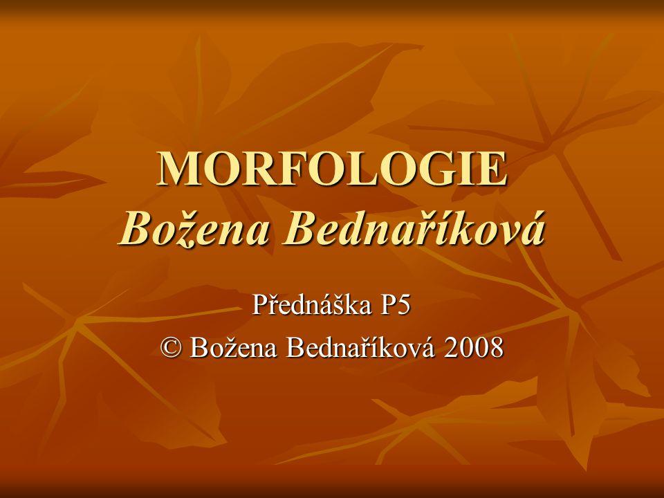 MORFOLOGIE Božena Bednaříková