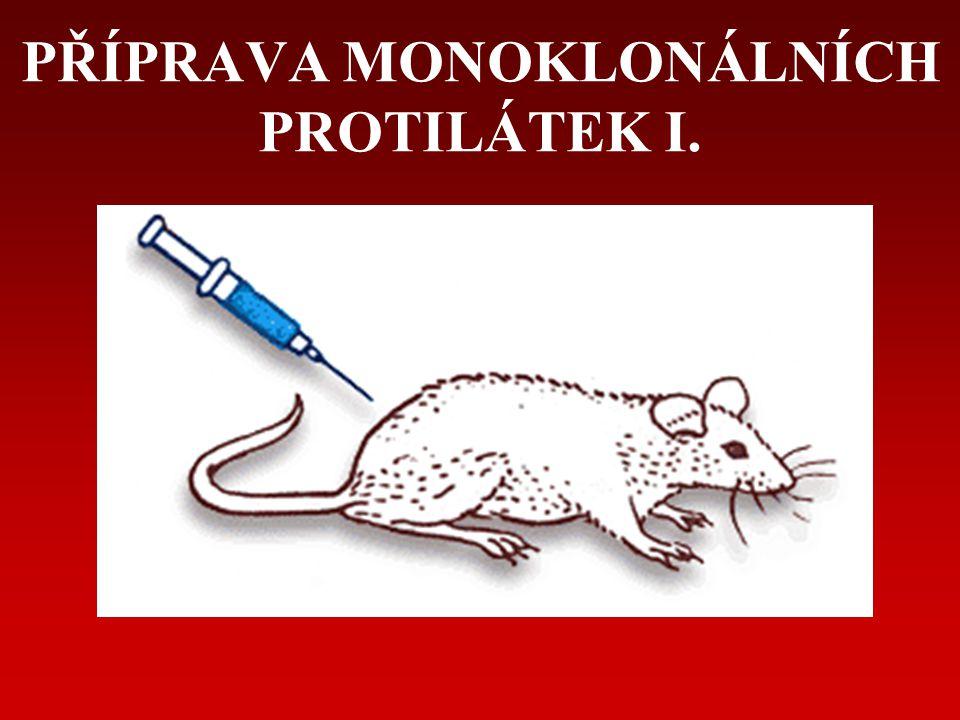 PŘÍPRAVA MONOKLONÁLNÍCH PROTILÁTEK I.