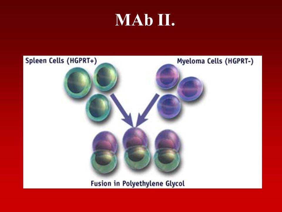 MAb II.