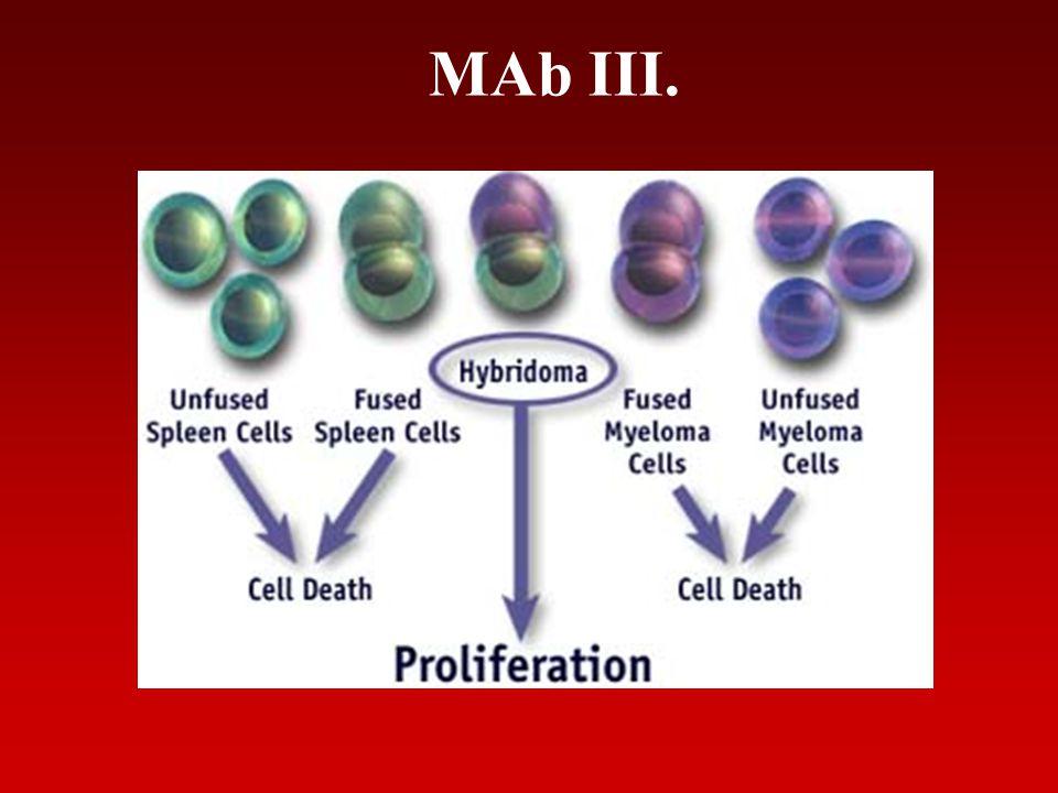 MAb III.