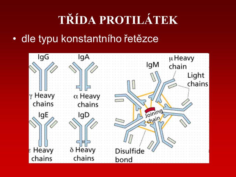 TŘÍDA PROTILÁTEK dle typu konstantního řetězce
