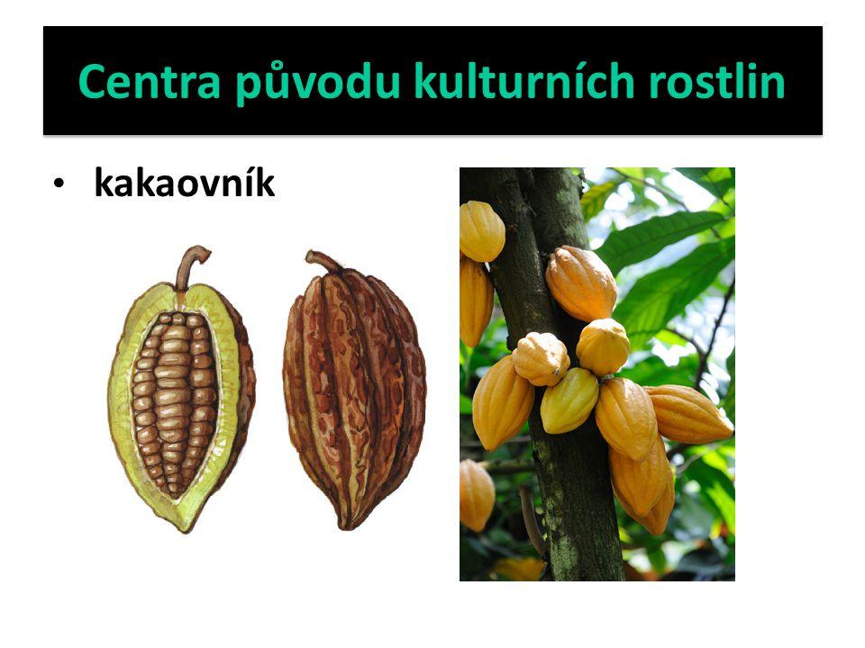 Centra původu kulturních rostlin