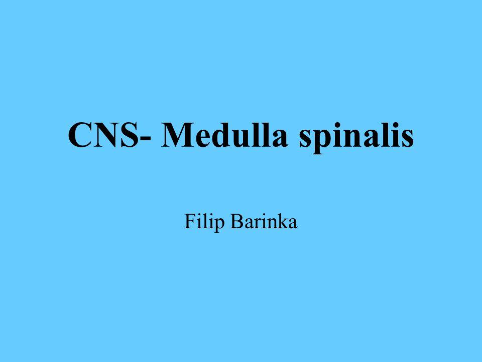 CNS- Medulla spinalis Filip Barinka