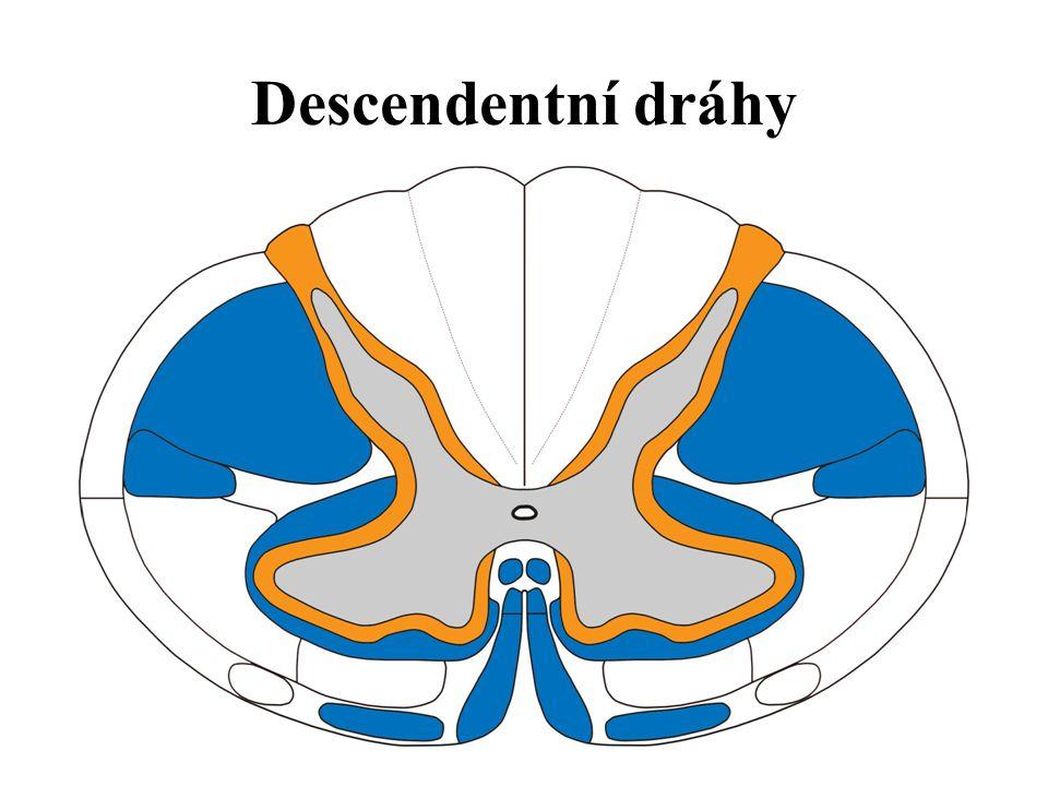 Descendentní dráhy