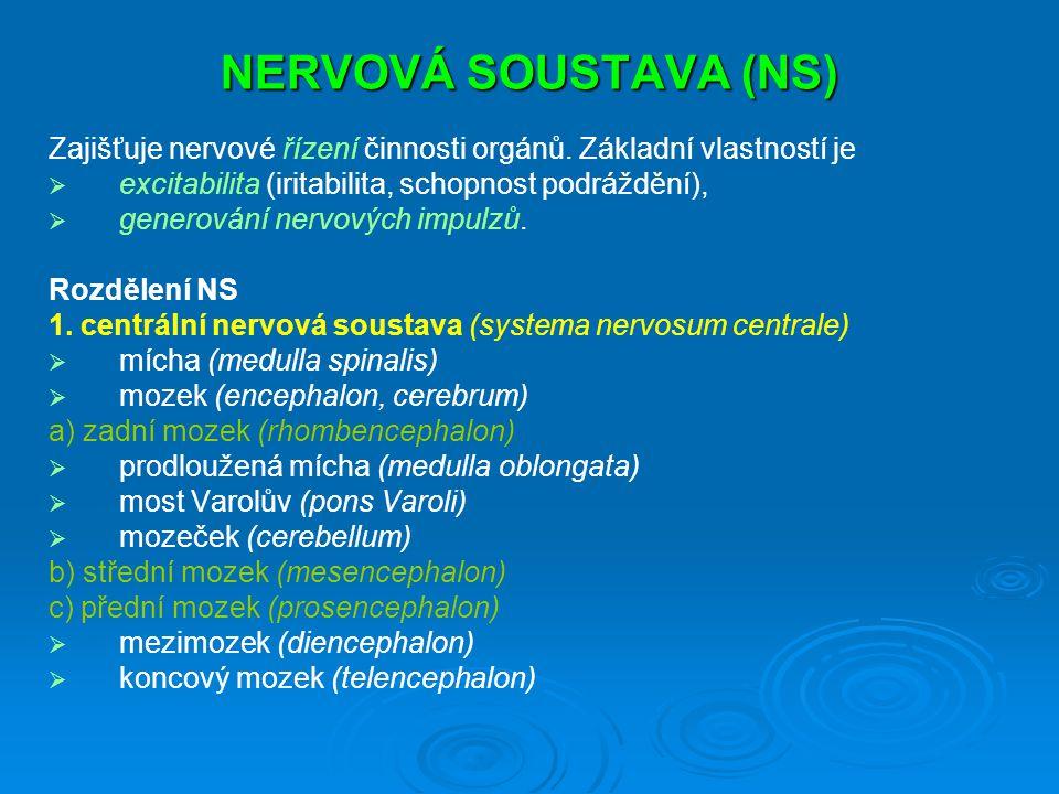 NERVOVÁ SOUSTAVA (NS) Zajišťuje nervové řízení činnosti orgánů. Základní vlastností je. excitabilita (iritabilita, schopnost podráždění),