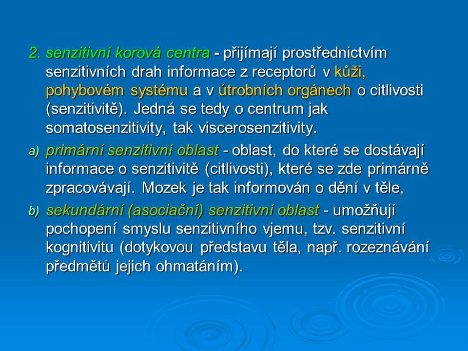 2. senzitivní korová centra - přijímají prostřednictvím senzitivních drah informace z receptorů v kůži, pohybovém systému a v útrobních orgánech o citlivosti (senzitivitě). Jedná se tedy o centrum jak somatosenzitivity, tak viscerosenzitivity.