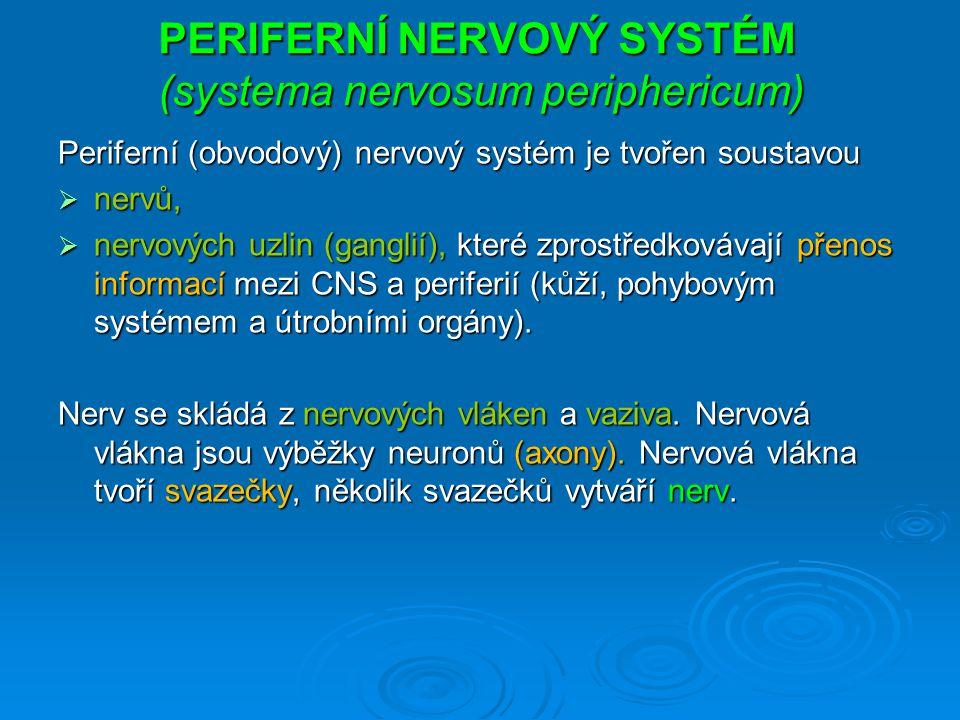 PERIFERNÍ NERVOVÝ SYSTÉM (systema nervosum periphericum)