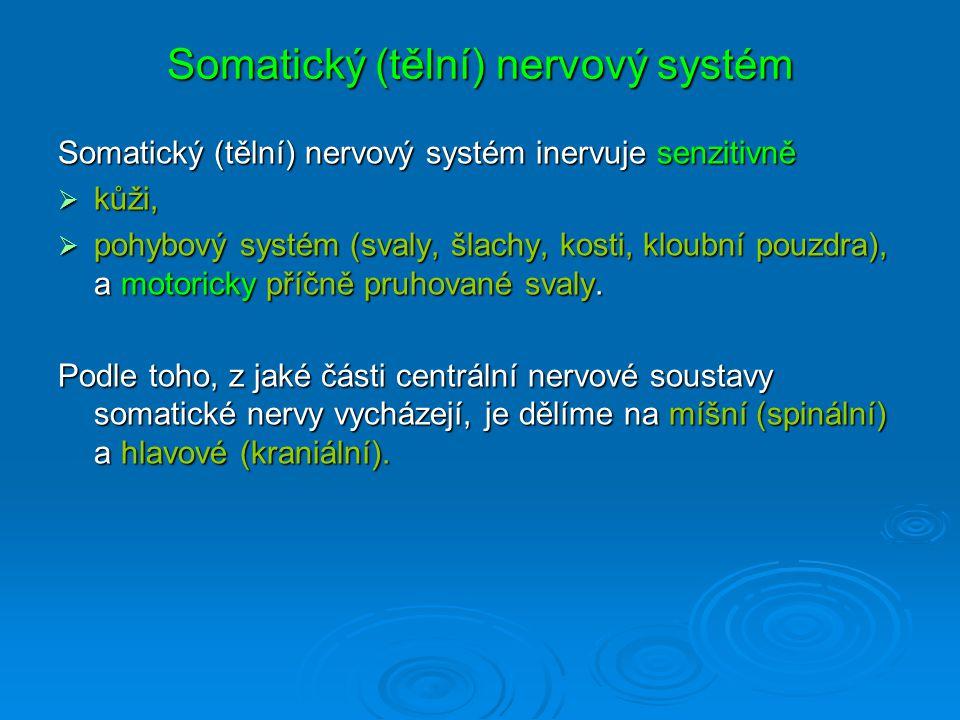 Somatický (tělní) nervový systém