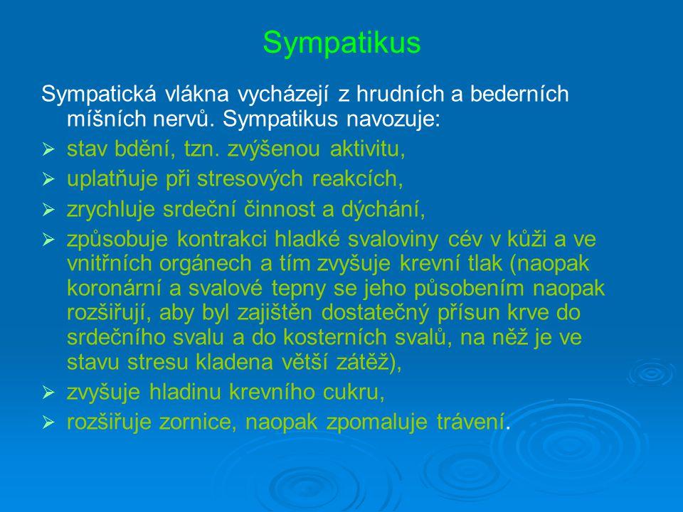 Sympatikus Sympatická vlákna vycházejí z hrudních a bederních míšních nervů. Sympatikus navozuje: stav bdění, tzn. zvýšenou aktivitu,