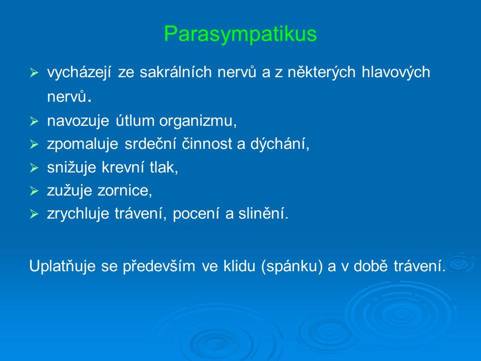 Parasympatikus vycházejí ze sakrálních nervů a z některých hlavových nervů. navozuje útlum organizmu,