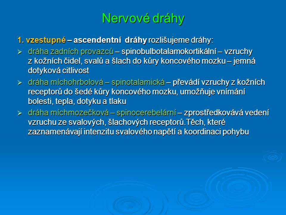 Nervové dráhy 1. vzestupné – ascendentní dráhy rozlišujeme dráhy: