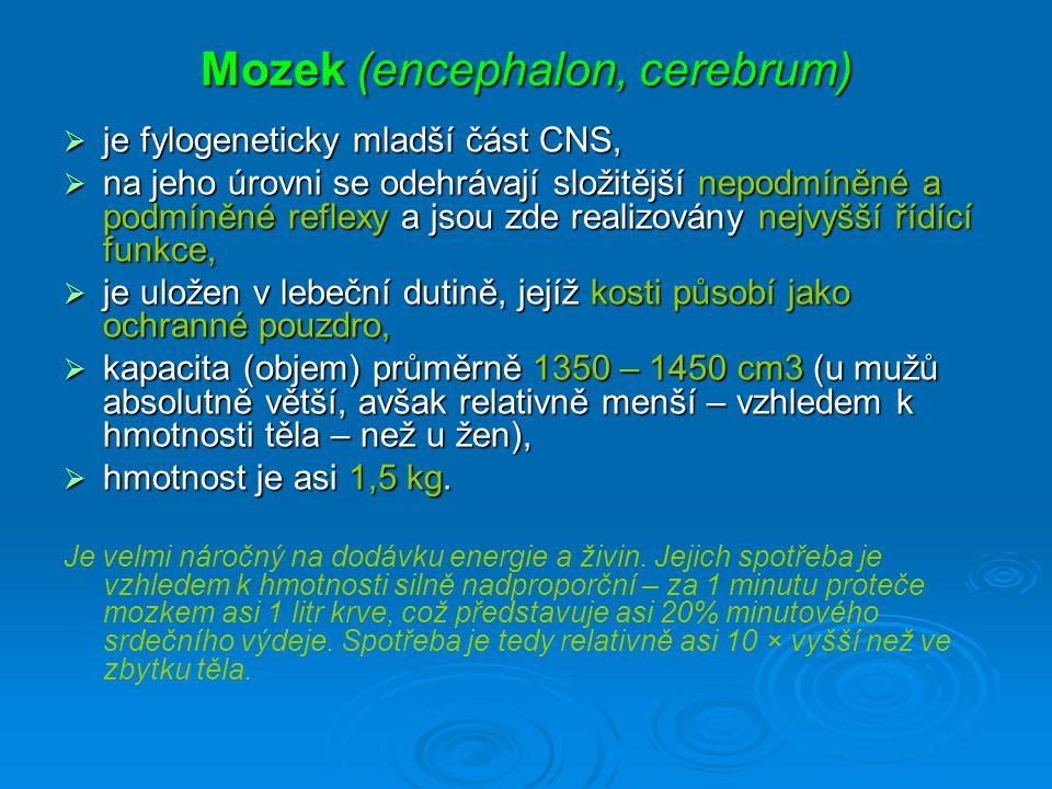 Mozek (encephalon, cerebrum)