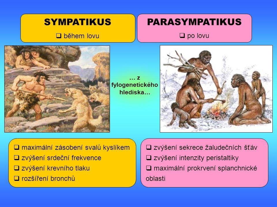 … z fylogenetického hlediska…