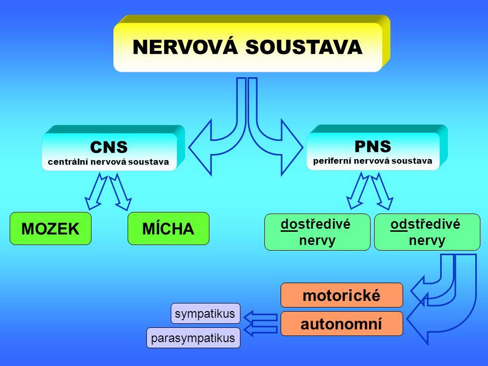 NERVOVÁ SOUSTAVA CNS PNS MOZEK MÍCHA motorické autonomní dostředivé