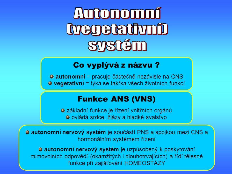 Autonomní (vegetativní) systém Co vyplývá z názvu Funkce ANS (VNS)