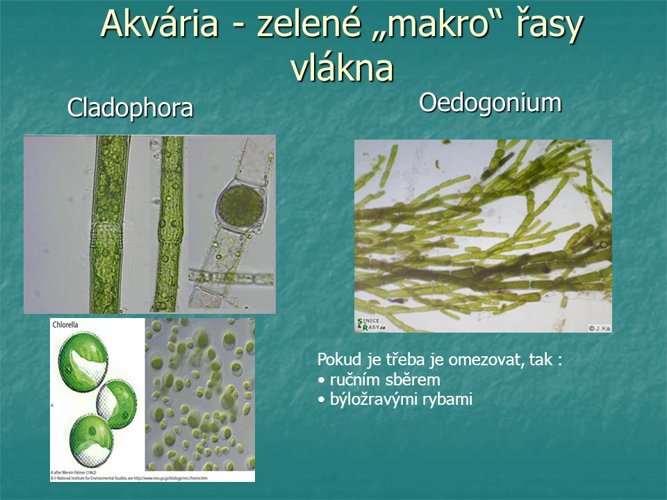 """Akvária - zelené """"makro řasy vlákna"""