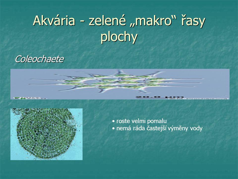 """Akvária - zelené """"makro řasy plochy"""